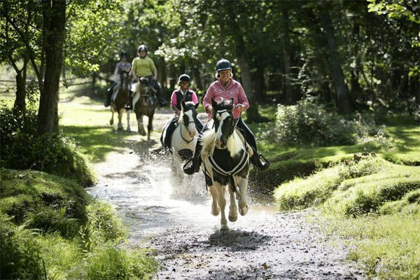 Two Hour New Forest Horse Riding Experience for One