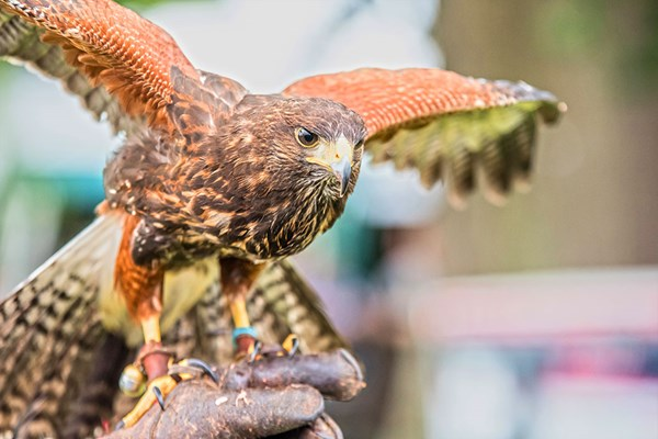 2 Hour Birds of Prey Experience at CJ's Birds of Prey