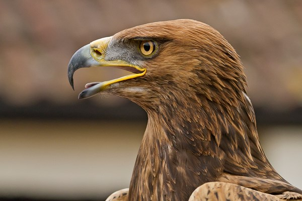 Half Day Falconry Experience For Two