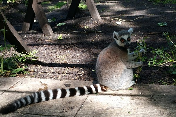 Meet the Animals for Two at Lakeland Wildlife Oasis
