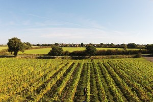 Vineyard Tour And Tasting With Lunch For Two At Prettyfields Vineyard