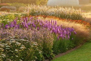 Online Professional Planting Design Course With An Expert For One
