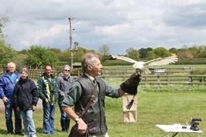 Bird Of Prey Falconry Experience