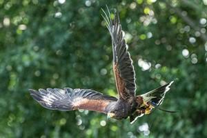 Discover Falconry At Millets Farm Falconry Centre, Oxfordshire