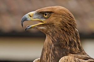 Full Day Falconry Experience For Two