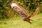 2 Hour Birds of Prey Experience for Two at CJ's Birds of Prey
